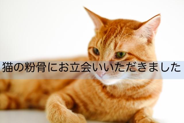 猫の粉骨にお立会い