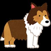 中型犬 骨壷サイズ シェルティ