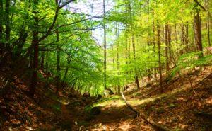 山林の散骨